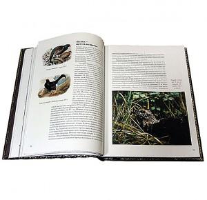 """Разворот подарочной книги с иллюстрациями """"Охота по перу"""" Фото 2"""