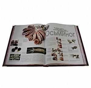 Подарочная книга Кулинария - фото 5