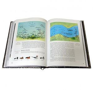 """Разворот подарочной книги с иллюстрациями """"Охота по перу"""" Фото 5"""